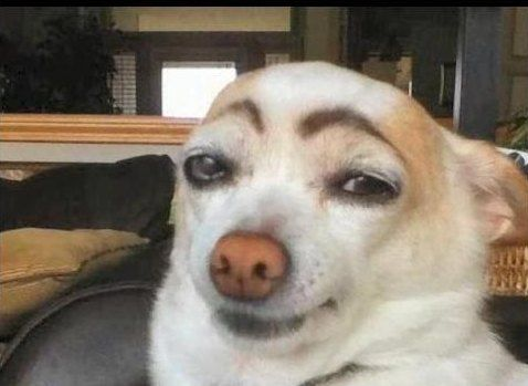 16 Gambar Anjing Lucu Yang Menggemaskan | FreshTure.com