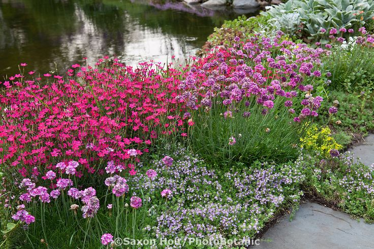 17 best images about gorgeous ground cover landscape for Perennial pond plants