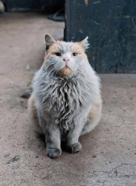Lernen Sie die Nevada Railway Cat kennen, die aussieht, als ob sie ein Bad braucht