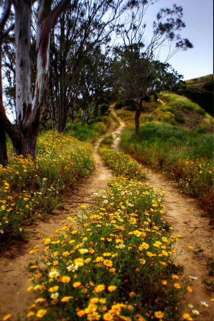 De fleurs parsemé, il est joli le chemin...