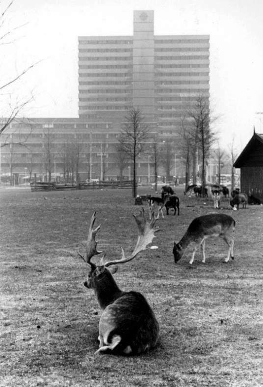 Het hertenkamp aan het Weena. Dit is een foto uit 1979.
