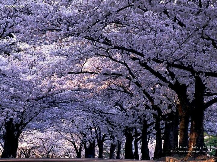 FB/Cool Japan