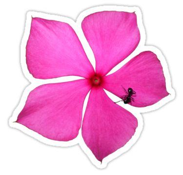 Pink Flower with Ant Sticker by StickerNuts