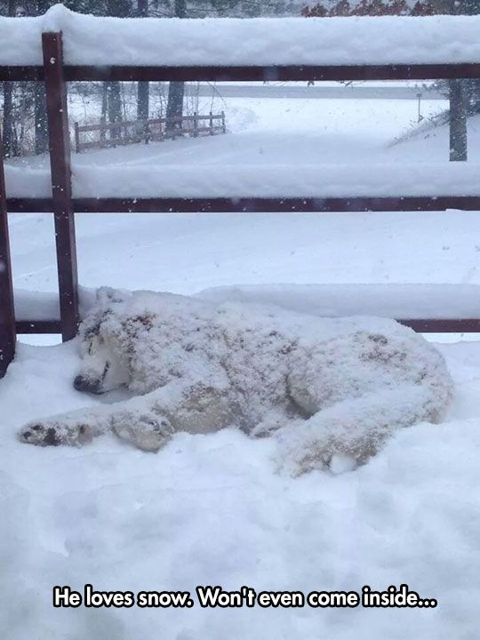 A Winter Breed. Makes me cold just to look at him! I would MAKE him come inside!