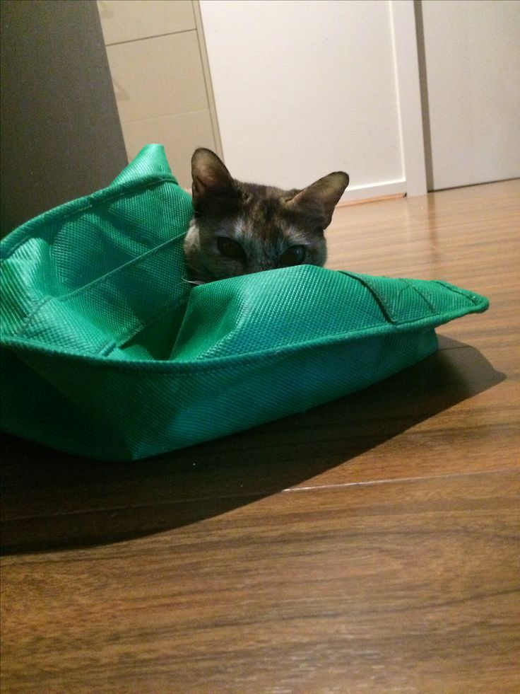 She loves to attack green bags