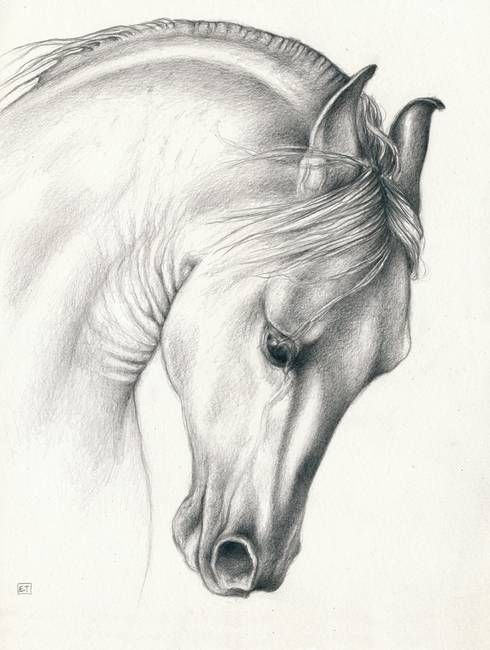 Classic Andalusian Horse by Evey Studios