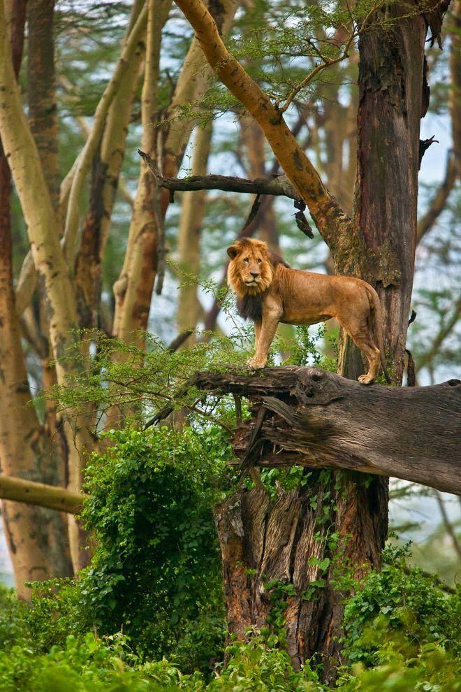 147 Best Jungle/Rainforest Images On Pinterest