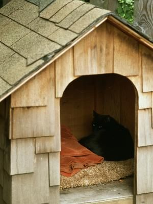 Cómo encontrar planos gratuitos de casas para perros | eHow en Español