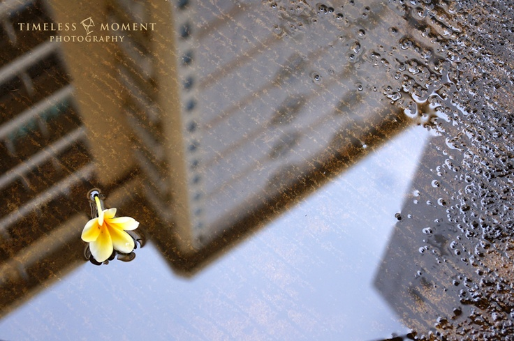 Reflection by Timeless Moment Photography