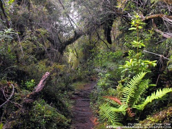Parque Cerro Ñielol, Temuco, Chile.