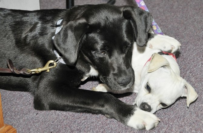 Puppies for Parole prepares dogs for adoption