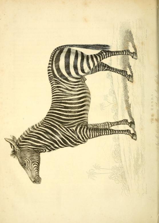 The wonders of the animal kingdom : - Biodiversity Heritage Library