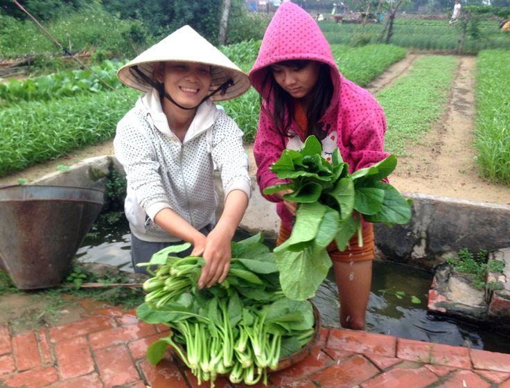 Two months later and the garden is ready for harvest!  Thanks CBHS! #vietnam #communityservice #vietnamschooltours