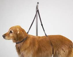 44 best shop images on pinterest dog grooming salons dog image result for diy dog grooming arm solutioingenieria Images