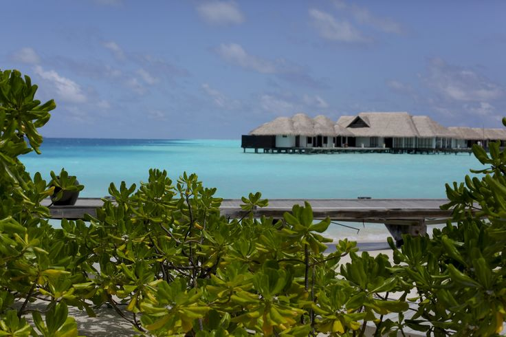 Reisetagebuch: Velassaru auf den Malediven - Journelles