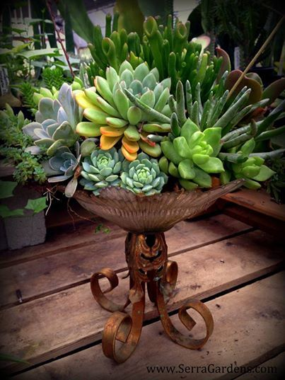 This beautiful vintage container garden courtesy of Nature Containers Vintage Garden Art is one of the treasures in our new shade house retail area. What will you find? Visit Nature Containers Vintage Garden Art on Facebook at https://www.facebook.com/naturecontainers?ref=br_tf