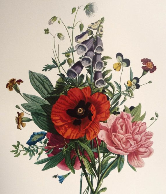 Vintage flower illustration of June Bouquet by Jean Louis Prevost for your traditional or shabby chic home decor. At AngelGrace on etsy.