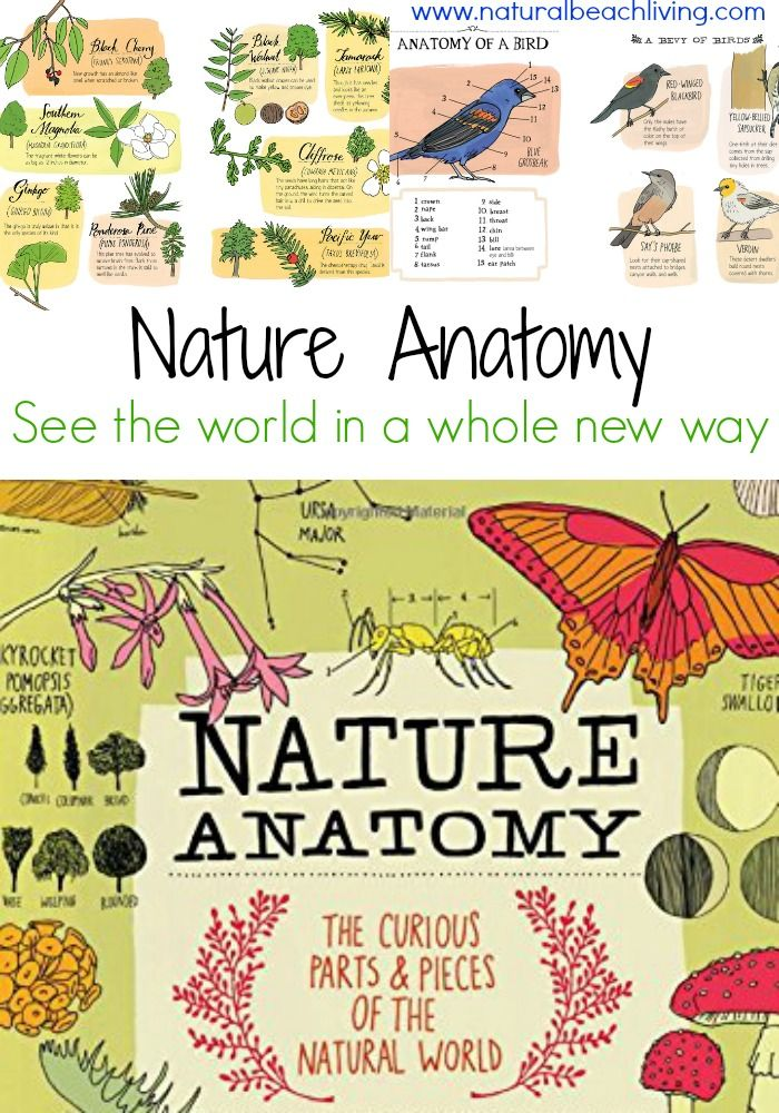 Nature Anatomy, See the world in a whole new way, encourage and inspire natural learning, Art and Science, perfect for kids and adults. (aff)