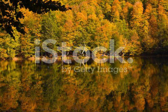 Fall Trees at Lake Edge of Yedigoller royalty-free stock photo