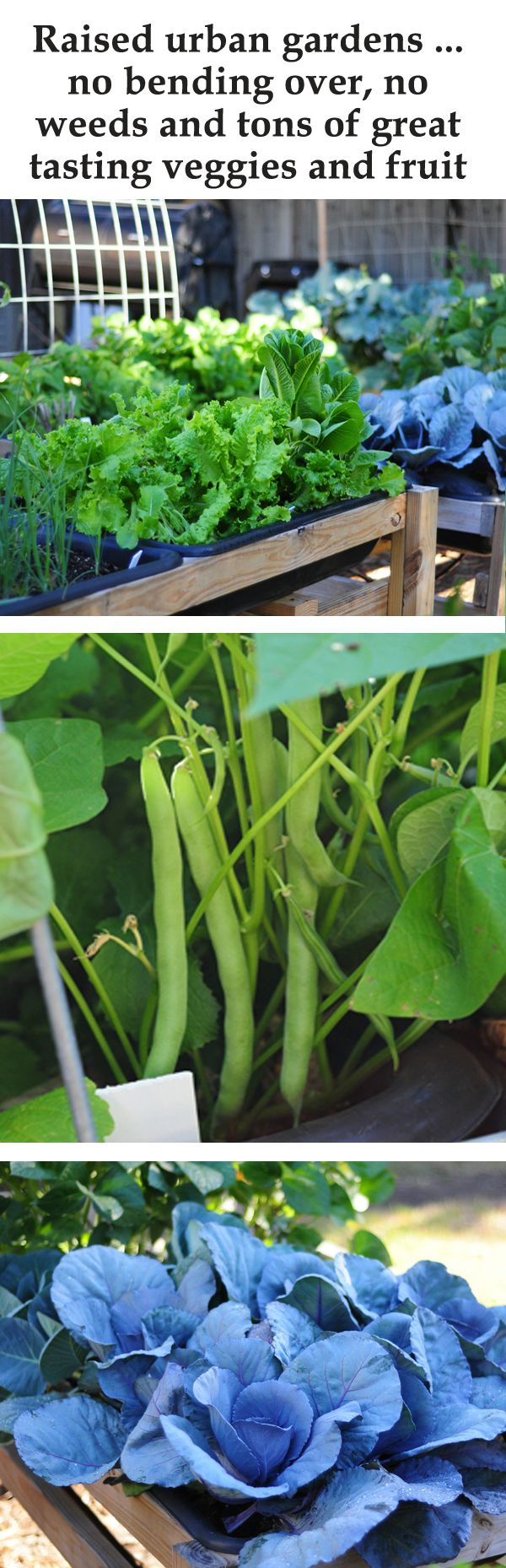 DIY garden. This has got to be the easiest and best way to garden. plans and how to garden on blog link. ~Mel @ RaisedUrbanGardens.com