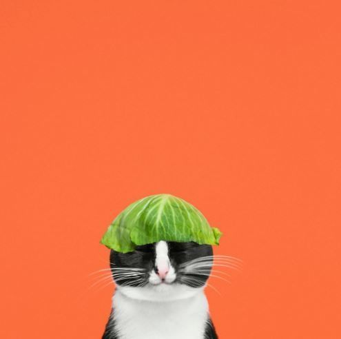 Best C A T S Images On Pinterest Crazy Cat Lady Funny Cats - This photographer is celebrating stray cats through majestic portrait photographs