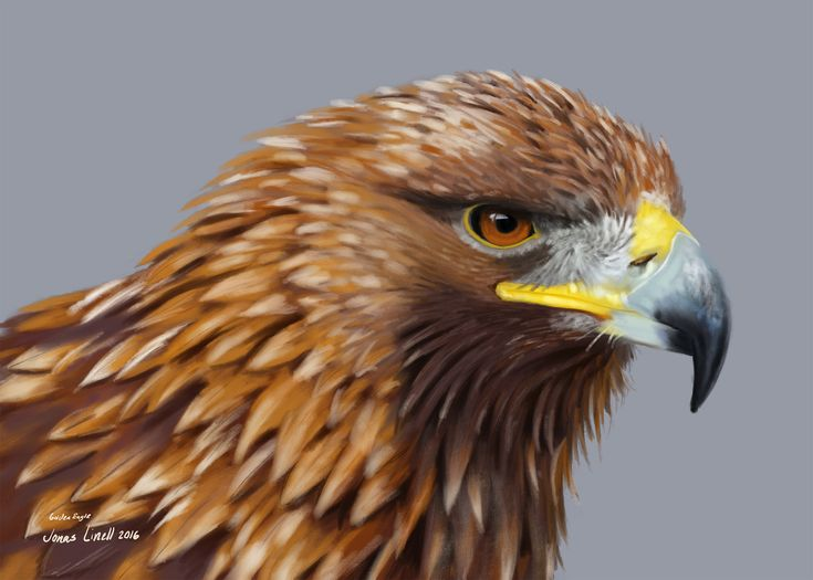 Golden Eagle, painted by Jonas Linell 2016