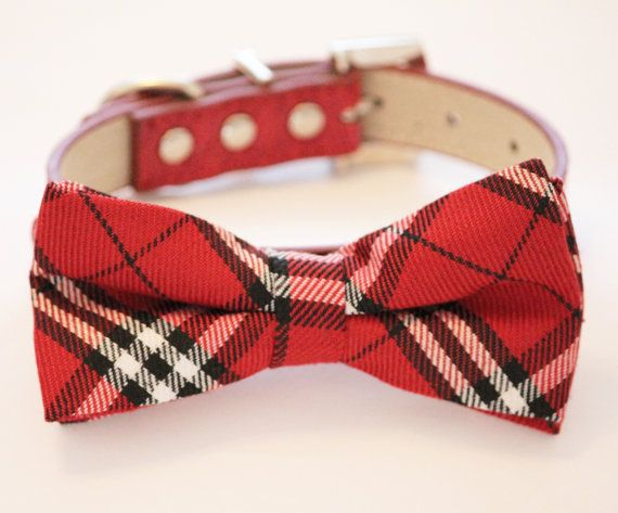 Top Collar Bow Adorable Dog - 9bbd8d52020c96457e1d0032edd4a607--dog-bow-ties-dog-bows  Snapshot_902624  .jpg