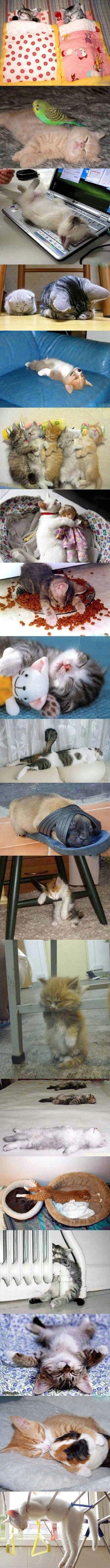 sleep postures