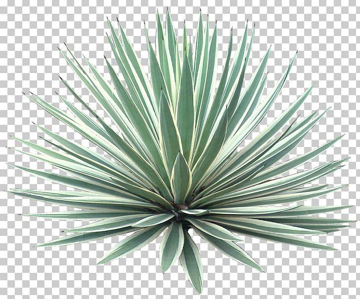 Download Free Trees Psd Elementos Del Paisaje Vegetacion Arbustos