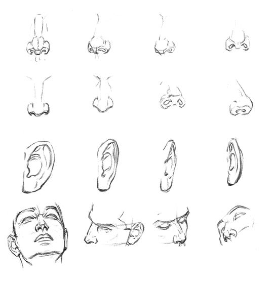 Character Design Noses : Les meilleures images du tableau character anatomy