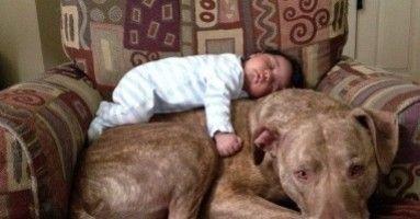 27 Foto's die laten zien dat pitbulls fantastisch lieve leuke gekke honden kunnen zijn!