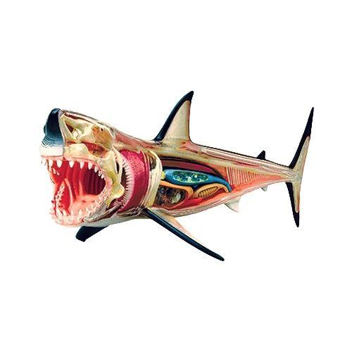 49 best images about sharks sharks and mores sharks on. Black Bedroom Furniture Sets. Home Design Ideas