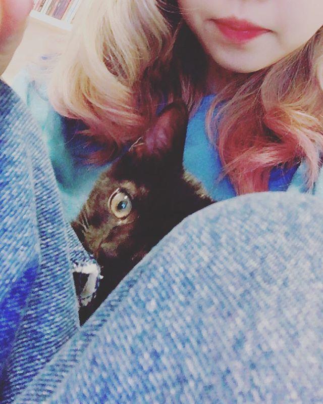 また来やがった。  #ノル #猫 #雑種猫 #保護猫 #生後3ヶ月 #cat #mixcat #blackcat #黒猫 #子猫 #baby #my #sweet #angel #甘えん坊 #すやすや #熟睡 #mylove #family #女の子 #可愛い #猫好きさんと繋がりたい #愛猫 #猫部