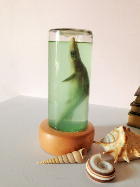 REAL PRESERVED SHARK in a Bottle Tiger Shark by AnnmarieFamilyTree