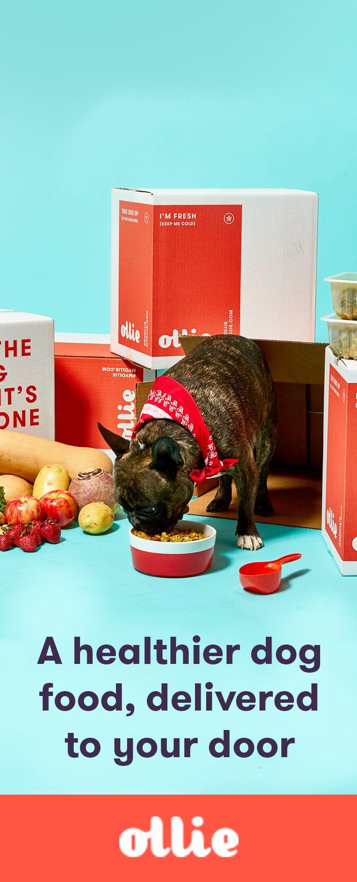 Meet Ollie - fresh dog food that will make them feel as good as it tastes - we guarantee it.