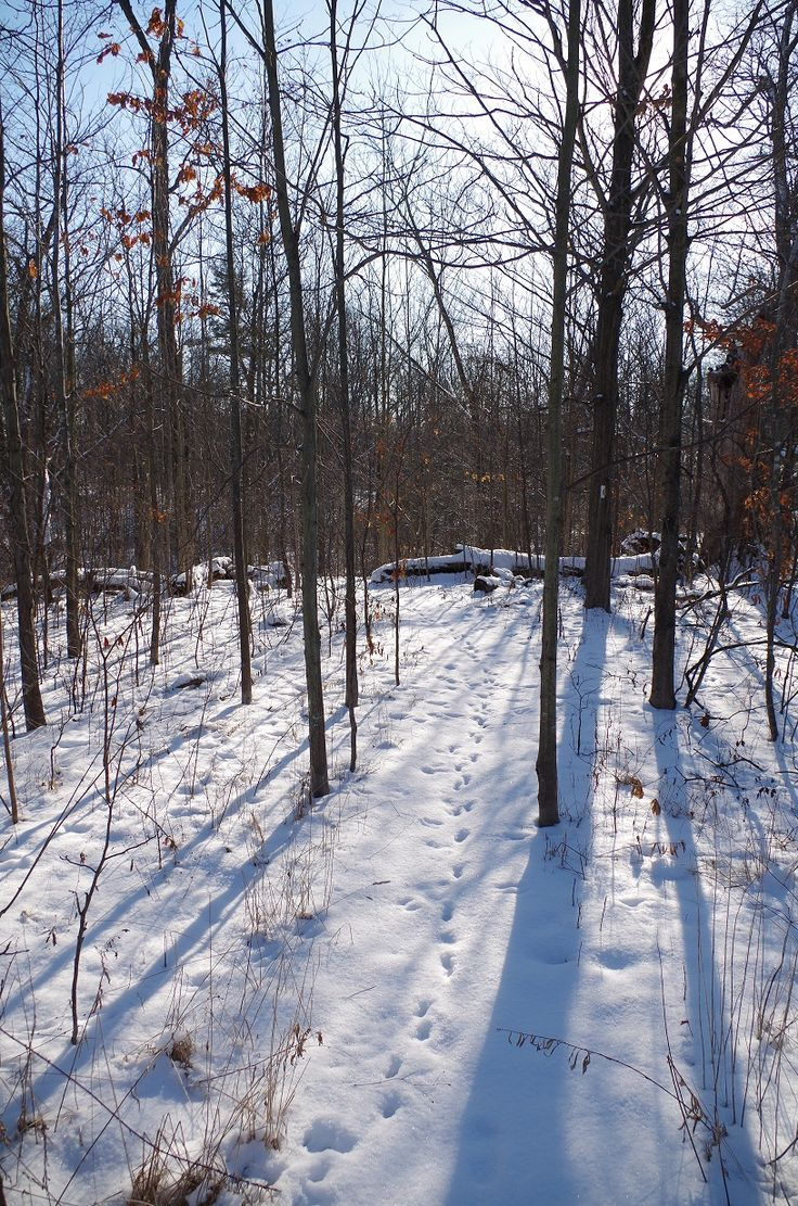 The Carolinian Trail of Ruthven Park in winter.