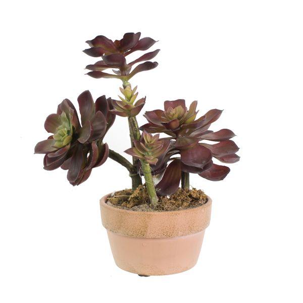 Les 25 meilleures id es de la cat gorie arrangements de - Plantes grasses en pot ...