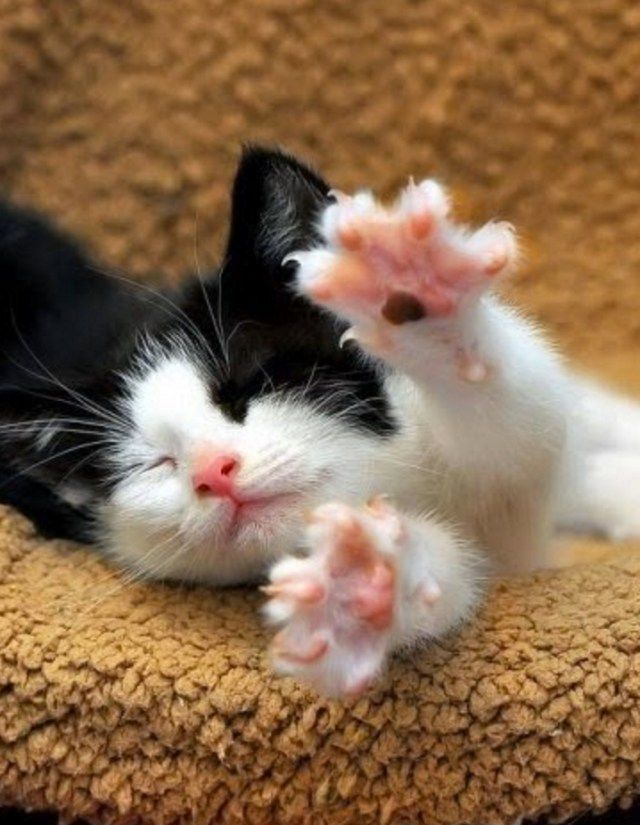 And Stretch !! #kittens #cats