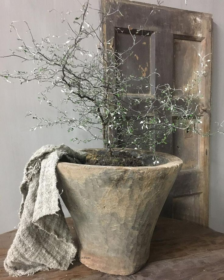 72 best corokia images on pinterest decorating ideas for Decor 718 container
