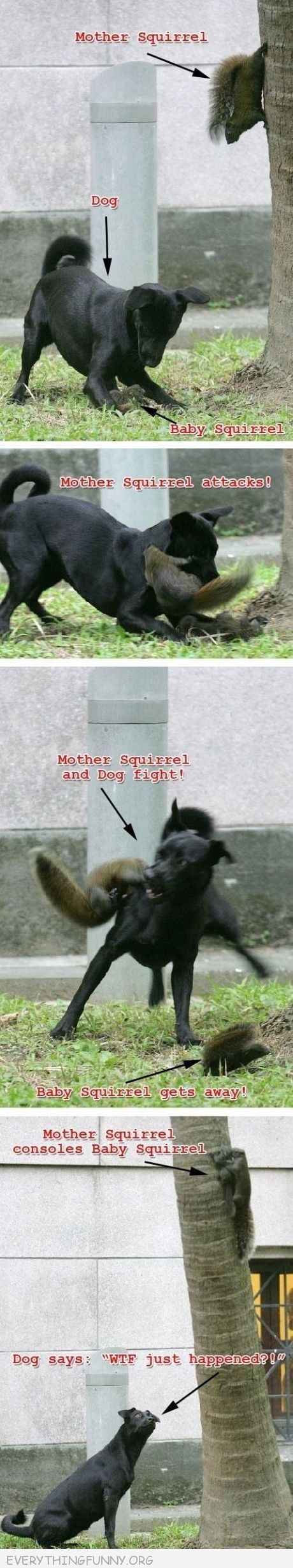 I do not like squirrels but this is pretty much an awesome example about how awesome mama love is. Also I hope it didnt have rabies.