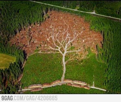 Oh... The irony... clear cutting art: Jocke Berglund, Nature, Art, Trees, Hurricane Tree, Forest, Photo, Oak Tree