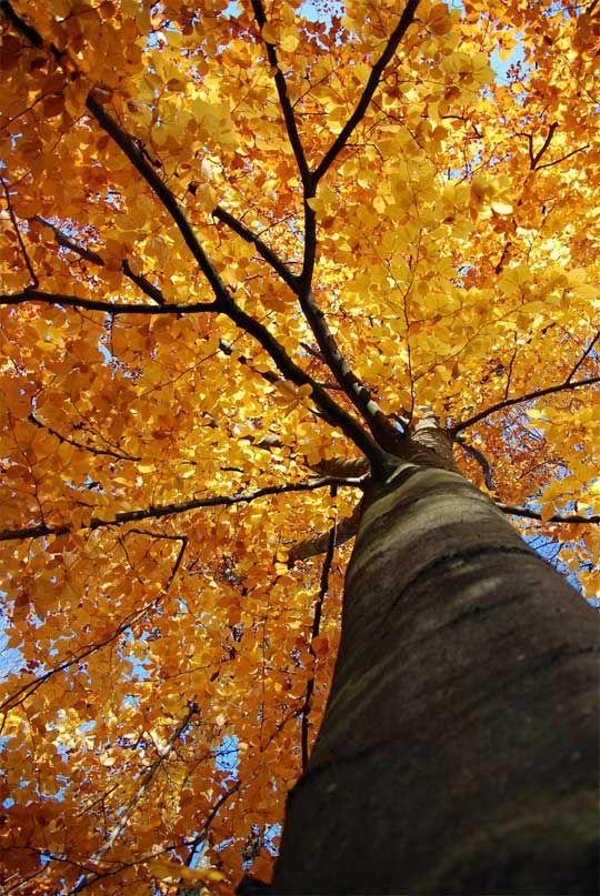 november: Autumn Halloween Thanksgiving, Fall Amazingness, November, Fall Colors, Amazing October, Amazing Nature, Photo, Quad Trees, Autumn S Falling
