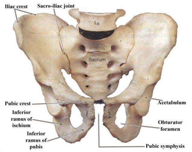 hip bone diagram hip bone diagram hip bone anat pelvis hip and lower spine hip bone diagram #3