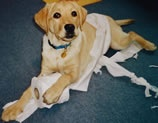 Andrex puppy (failed)
