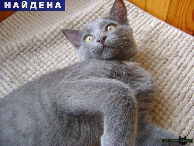 Найден кот г.Краснодар http://poiskzoo.ru/board/read25379.html  POISKZOO.RU/25379 Найден в Юбилейном микрорайоне котенок порода русский голубой .. месяцев, ручной домашний. Новые хозяева-откликнитесь, мальчуган очень классный!   РЕПОСТ! @POISKZOO2 #POISKZOO.RU #Найдена #кошка #Найдена_кошка #НайденаКошка #Краснодар