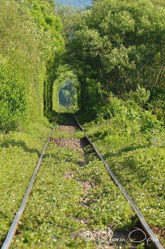 Tunelul verde | Bihor in imagini