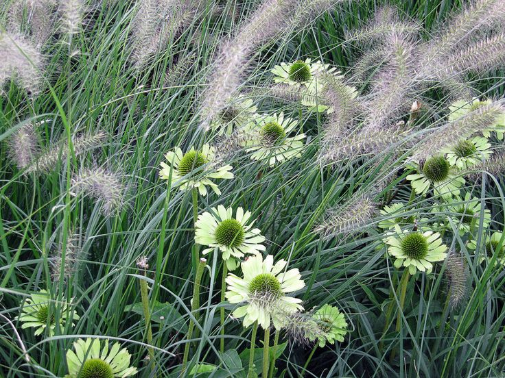 1000 images about planting combinations on pinterest for Planting schemes with grasses