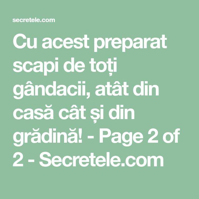 Cu acest preparat scapi de toți gândacii, atât din casă cât și din grădină! - Page 2 of 2 - Secretele.com