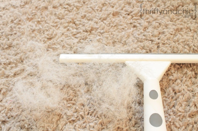 Remove Dog Hair From Carpet. - saw this earlier today went to the store and bought one it really works!!!