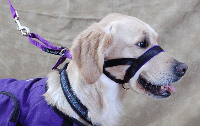 Head Halters: Just cause you can doesn't mean you should